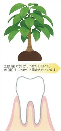 susumikata01